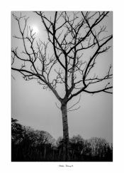 l'arbre i
