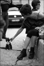 petit chat en laisse