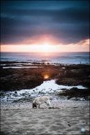 chien sur la plage