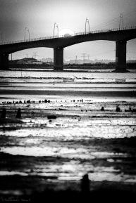 le pont de seudre