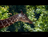 Zoo de Beauval -11 Thierry H
